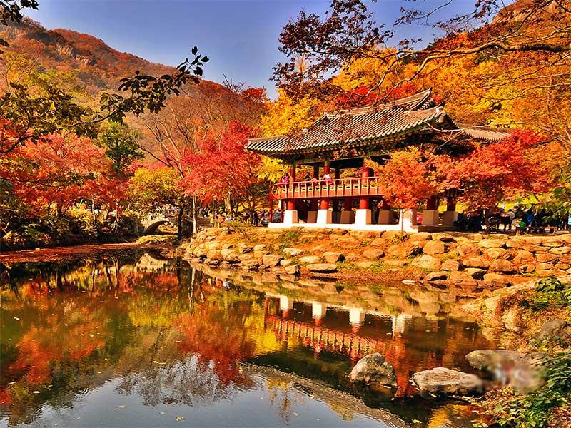 Khám phá Hàn Quốc -XUÂN 2020 HÀ NỘI – SEOUL –  NAMI -EVERLAND