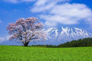DU LỊCH AOMORI – FUKUSHIMA – IWATE, CUNG ĐƯỜNG TIÊN CẢNH CỦA XỨ SỞ HOA ANH ĐÀO 2020